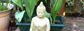 Buddha in my garden!